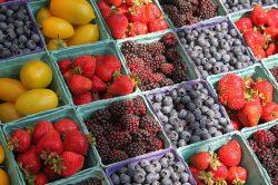 freshfarm-market