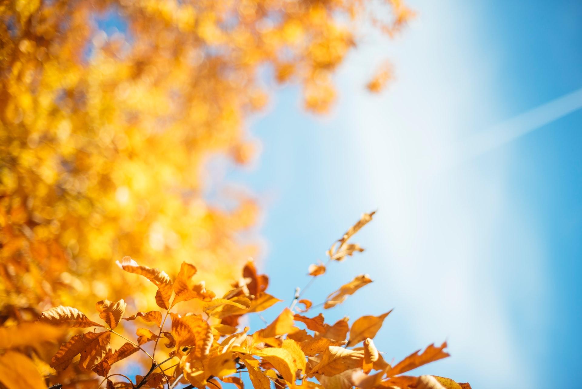 Where to Spend a Sunny Fall Day Near Central: Sligo Creek Stream Valley Park