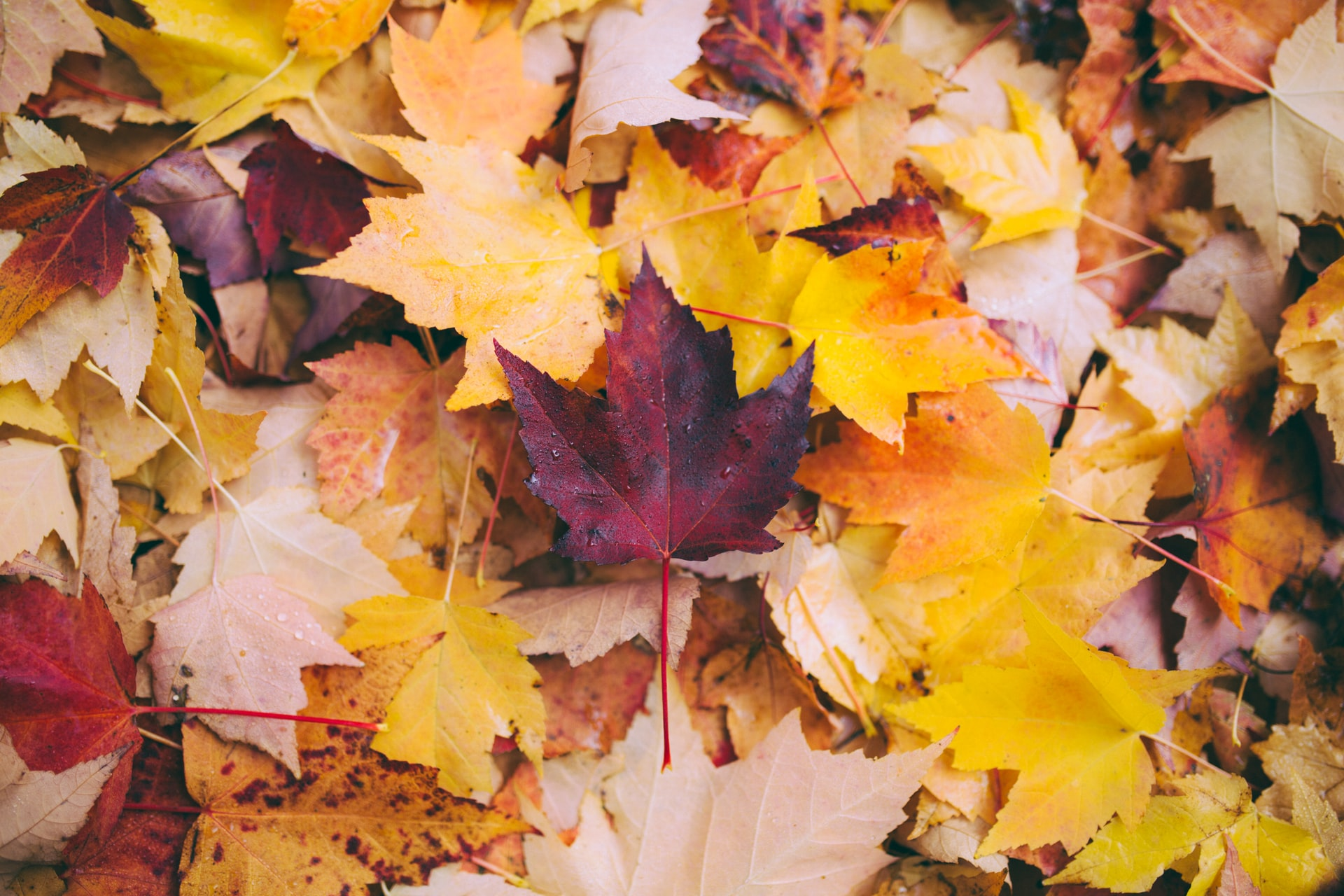 DePaul's Urban Farm: An Autumn Tradition Continues Near Central